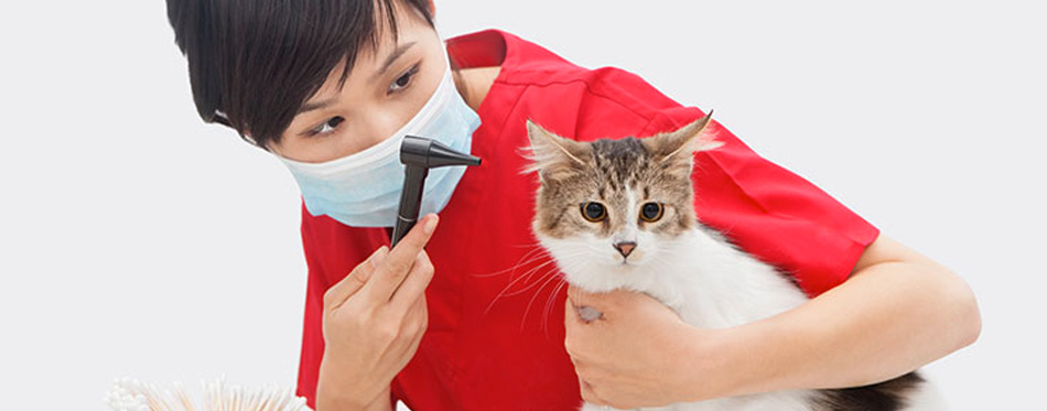 veterian and cat