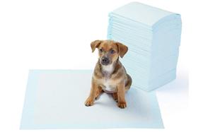 AmazonBasics-Dog-Training-and-Puppy-Pads-image
