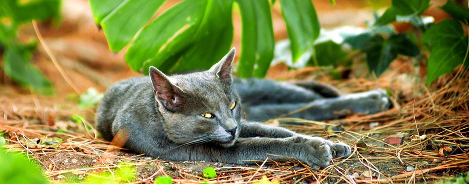An street cat resting