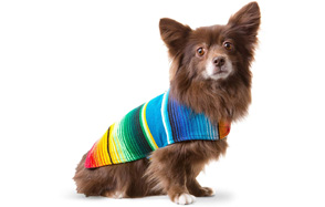 Baja-Ponchos-Handmade-Dog-Sweater-image