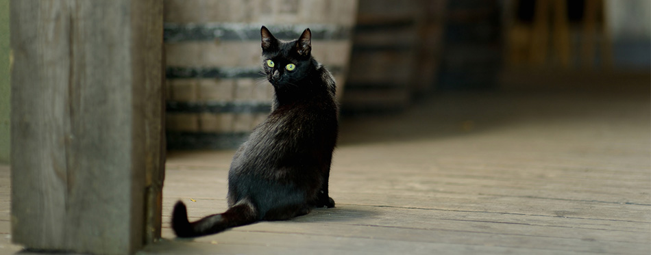 Black cat in an old winery