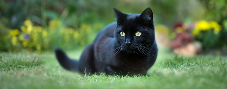 Black cat sitting in the grass