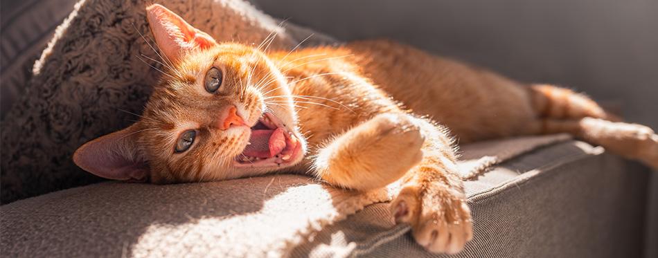 Brown tabby cat lying on a sofa