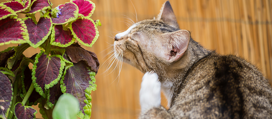 Cat itches on the street near the flower