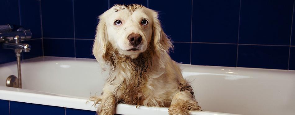DIRTY DOG BATHING