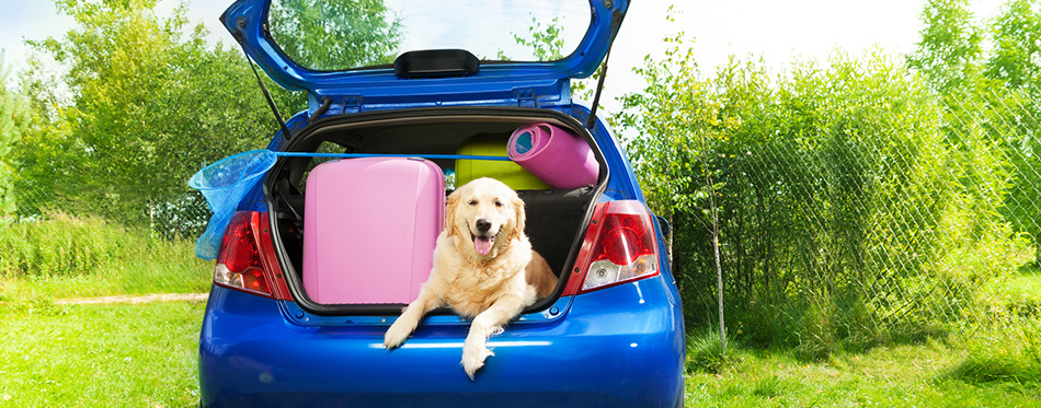 Dog and luggage in the car trunk