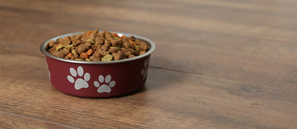 Dog food in bowl on floor at home