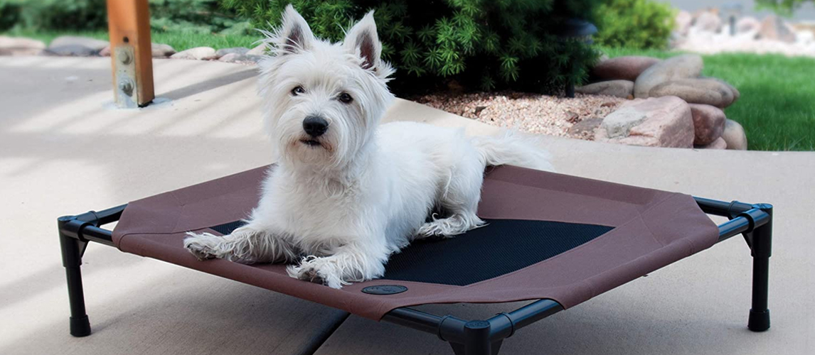 Dog lying on a elevated dog bed