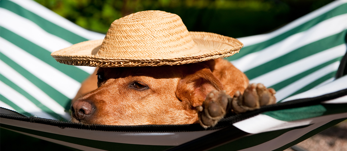 Dog with hat resting