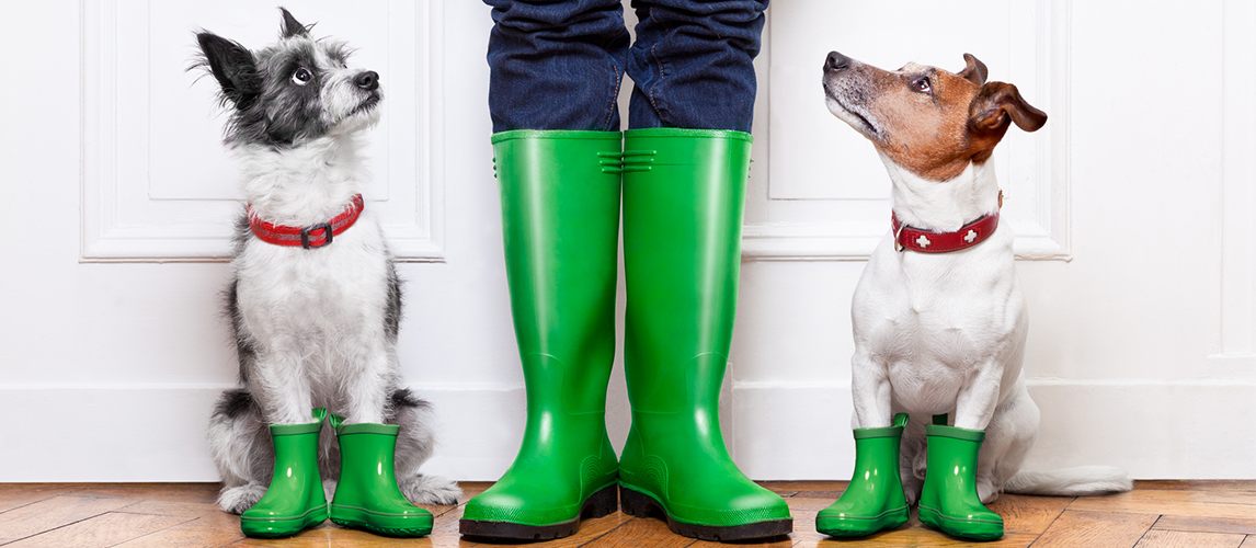 Dogs with boots