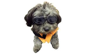 Enjoying-Dog-Goggles-image