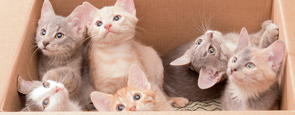 Funny little kittens in a box