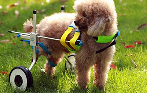 Newlife-Mobility-Adjustable-Dog-Wheelchair-image