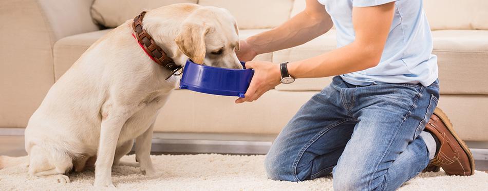 Owner feeding his dog