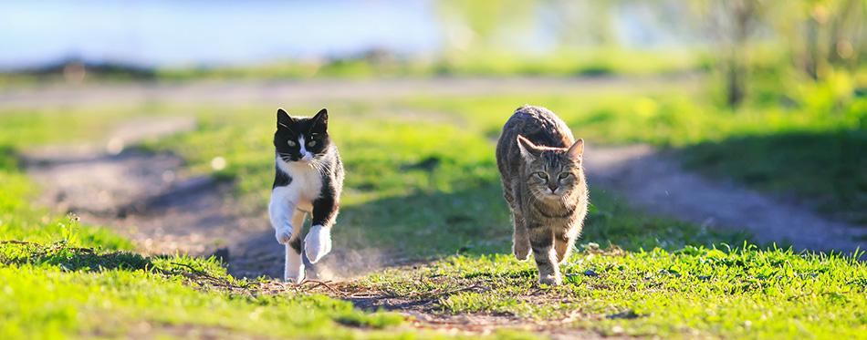 Pair of cute funny cats fun running