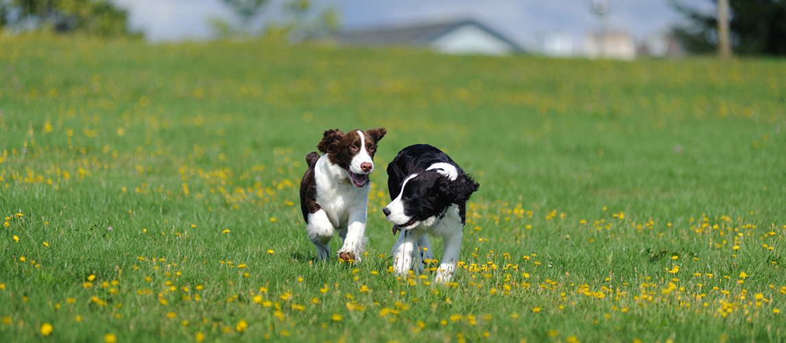 Puppies playing in a field