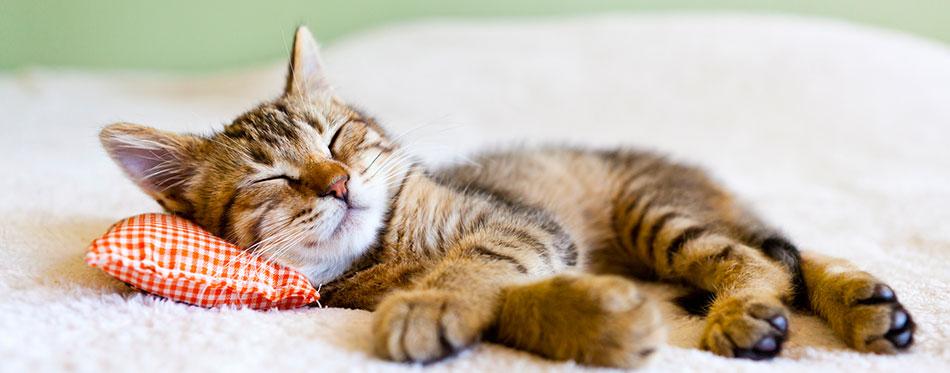 Small Kitty Sleeping