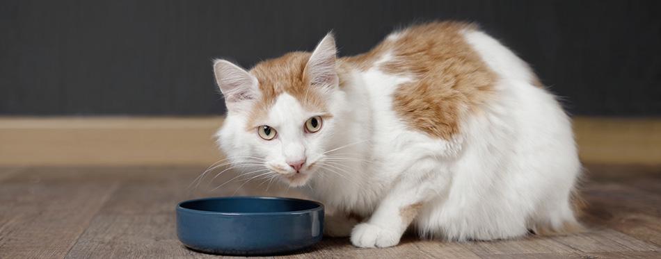 Tabby longhair cat sit