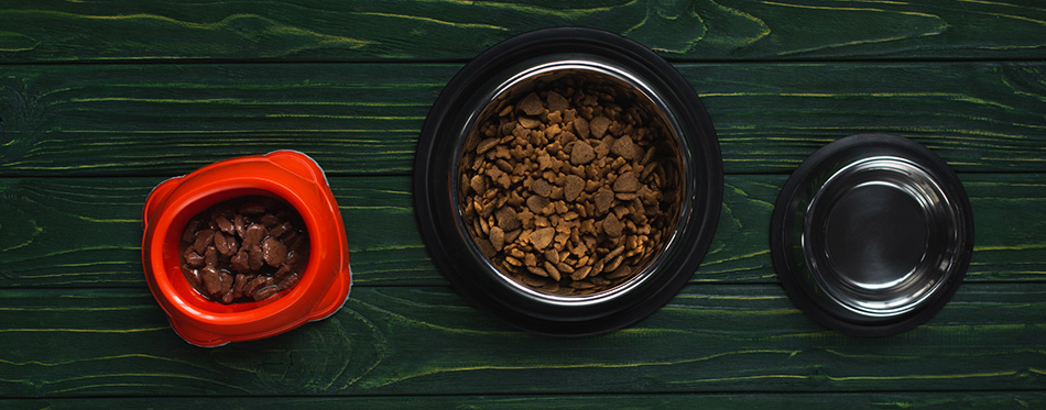 Top view of bowls with pet food in row on green wooden surface