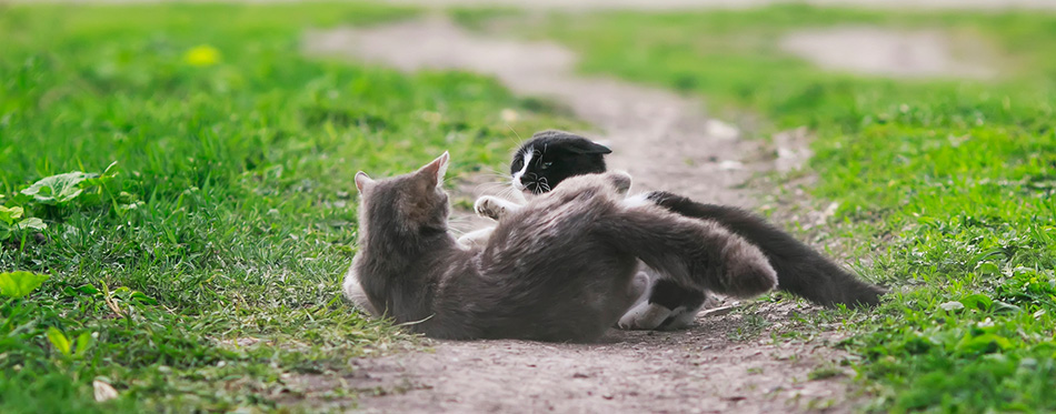 Two cats fighting in the yard
