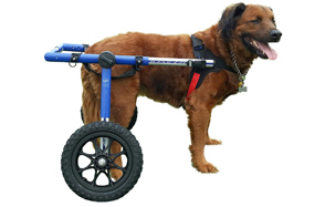 Walkin'-Wheels-Dog-Wheelchair-For-Large-Dogs-image