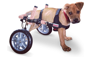 Walkin'-Wheels-Dog-Wheelchair-for-Small-Dogs-image