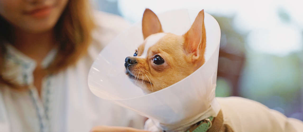 The Best Dog Cones (Review) in 2021   Pet Side