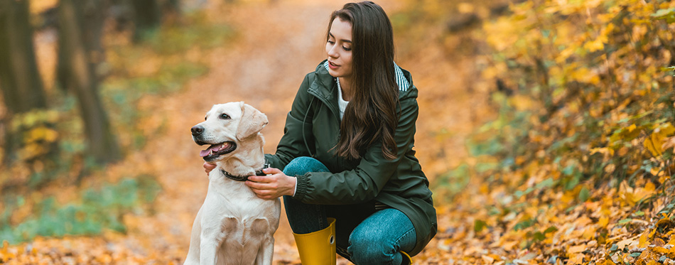 Young woman adjusting dog collar on golden retriever w