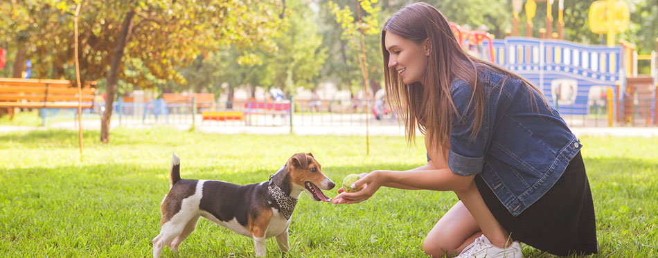 brunette woman in casual outfit in park with her jack russell dog
