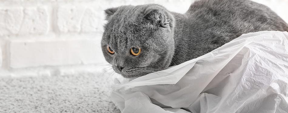 cat sitting in plastic bag on floor