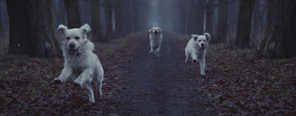 dogs running in the dark
