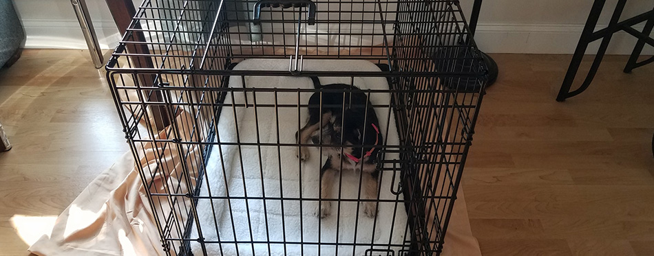 puppy in metal cage