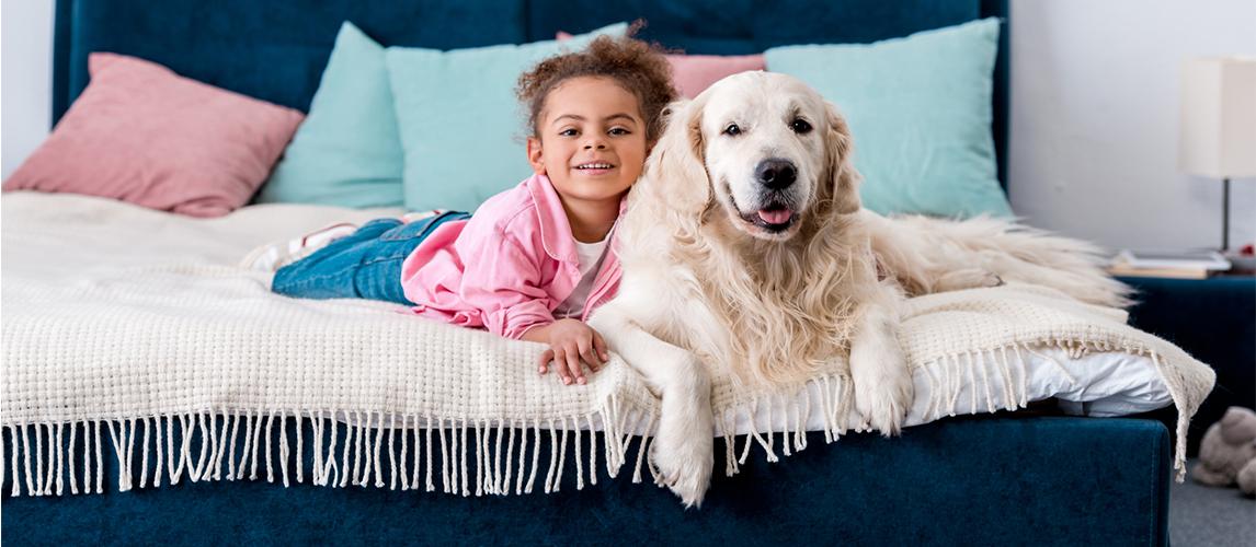 10 Best Dog Breeds For Kids Pet Side