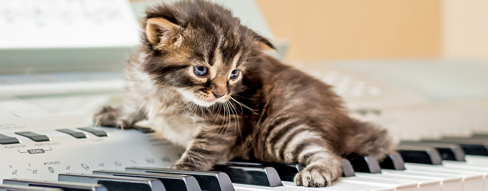 A small striped kitten on the piano keys