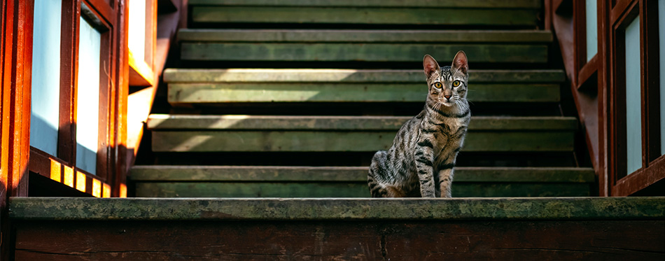 Cat sitting on the stairs