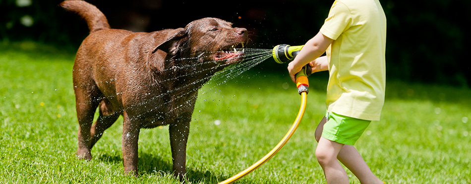 Child Dog Water Happy Play