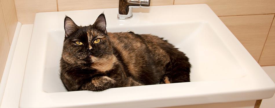 Chimera cat in the sink