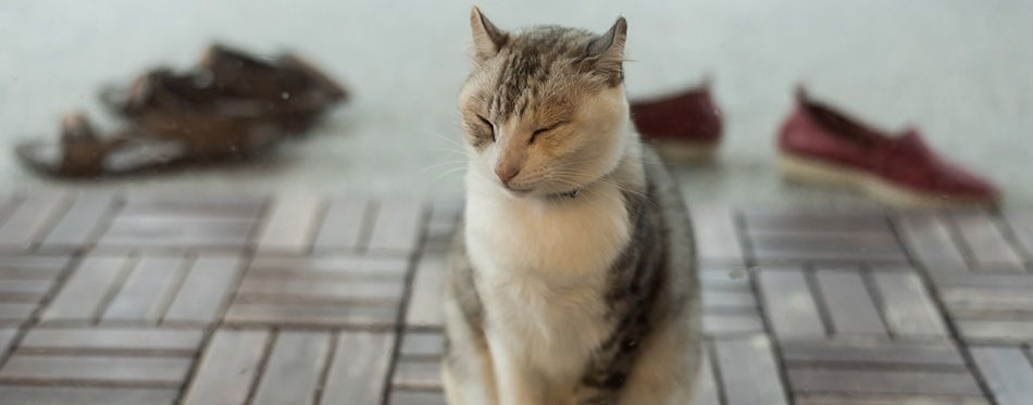 Cute cat feel tired and wait before the door