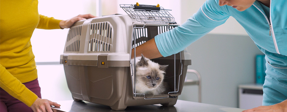 Cute cat inside a pet carrier