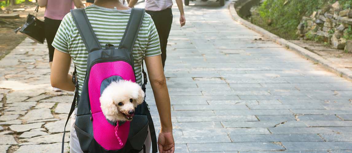 Cute dog peeking from carrying backpack