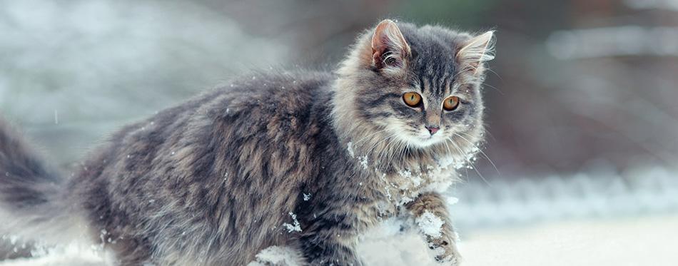 Cute kitten walking in the snow