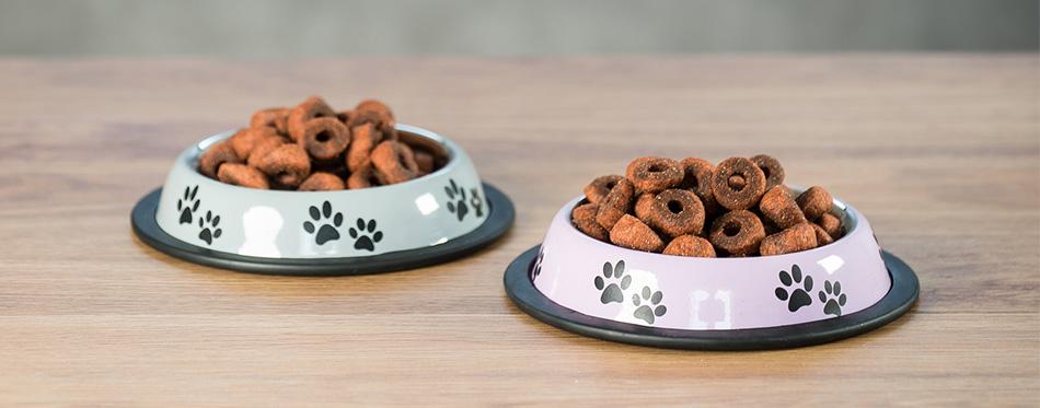 Dog dry food on table