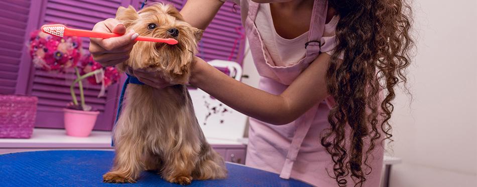 Dog's teeth brushing