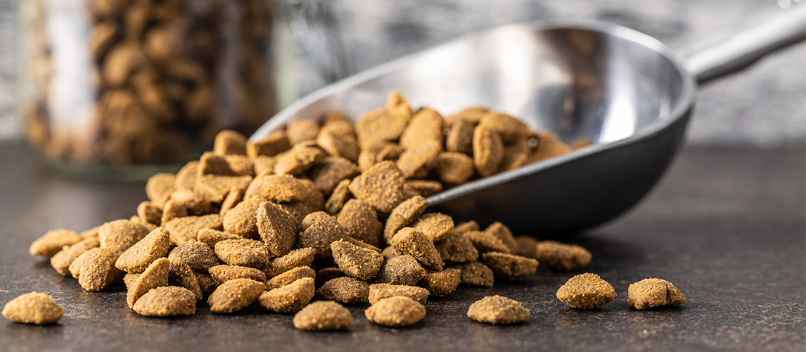 Dried kibble pet food in scoop