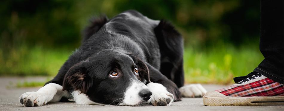 Embarrassed dog