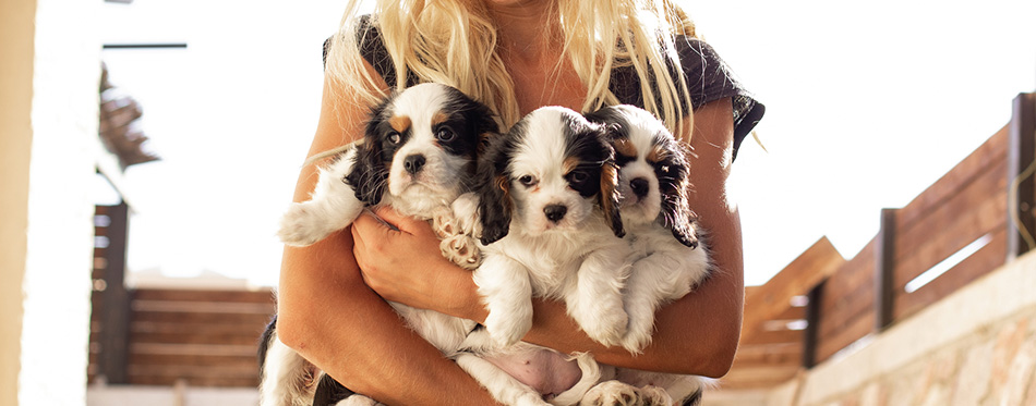 Girl hands holding puppies