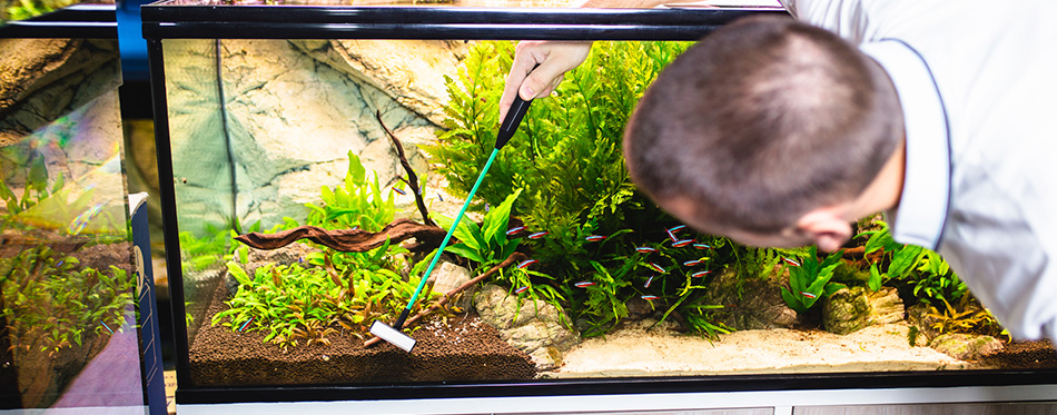Man cleaning a fish tank