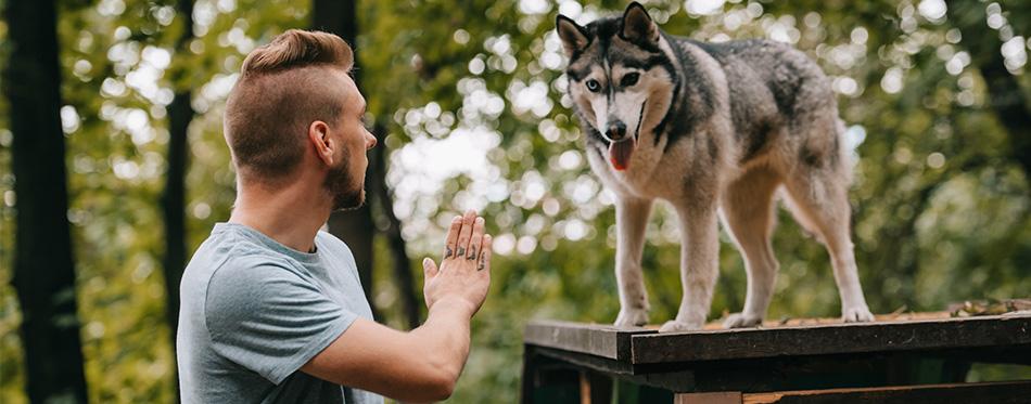 Man trains his dog