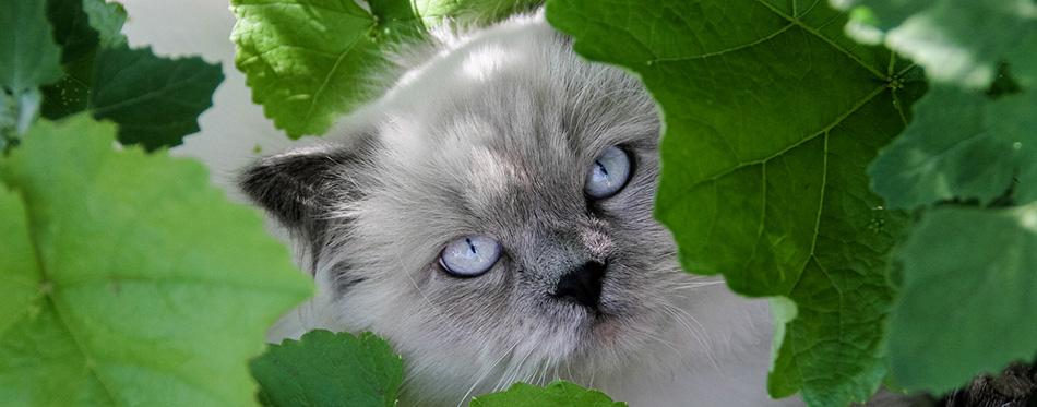 Most beautiful prettiest cat breeds in the world