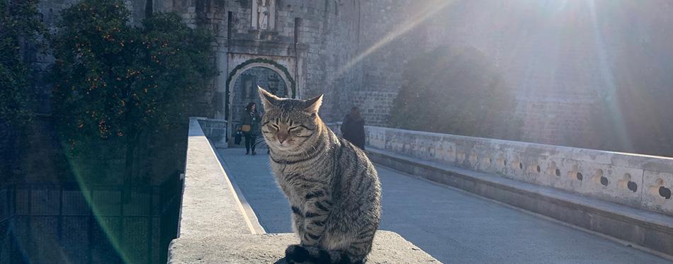 Old tabby cat on the bridge in dubrovnik